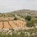 جيش الاحتلال يرفض تسليم فلسطينيين أراضيهم بغور الأردن