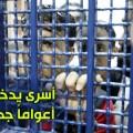 أسرى في السجون الصهيونية
