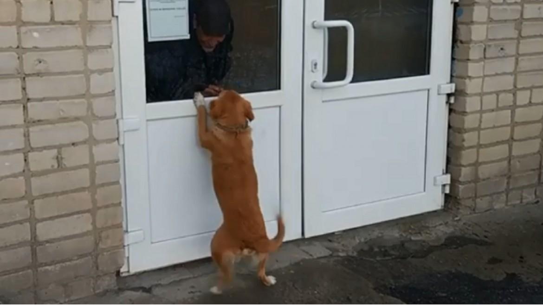 الكلب
